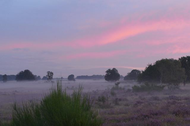 Nature, Landscape, Morning Mist, Heide, Sunrise, Air