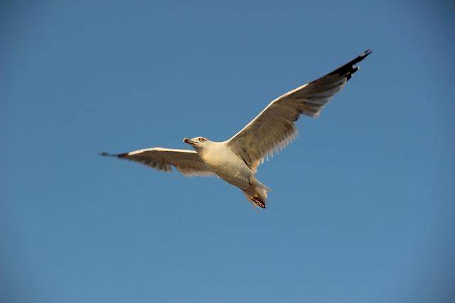 Sky, Bird, Fly, Airfare