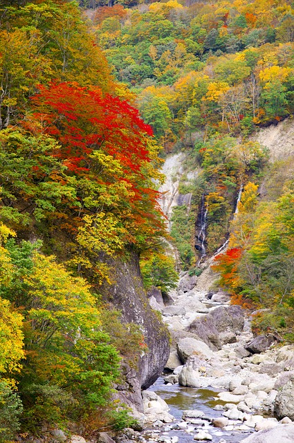 Japan, Autumnal Leaves, Akiyama Township, Valley