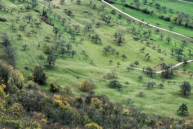 Swabian Alb, Landscape, Alb, Hike, Meadow, Trees