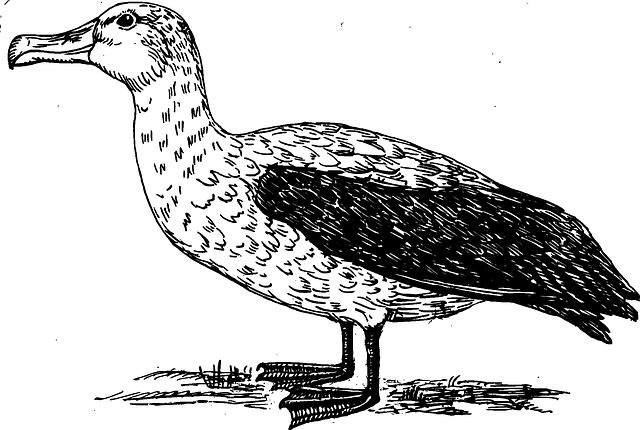 Bird, Wings, Albatross, Feathers, Species, Fly