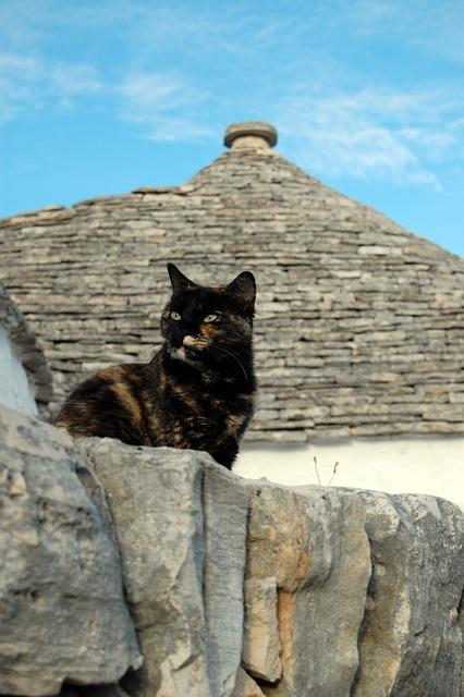 Alberobello, Cat, Trulli, Puglia