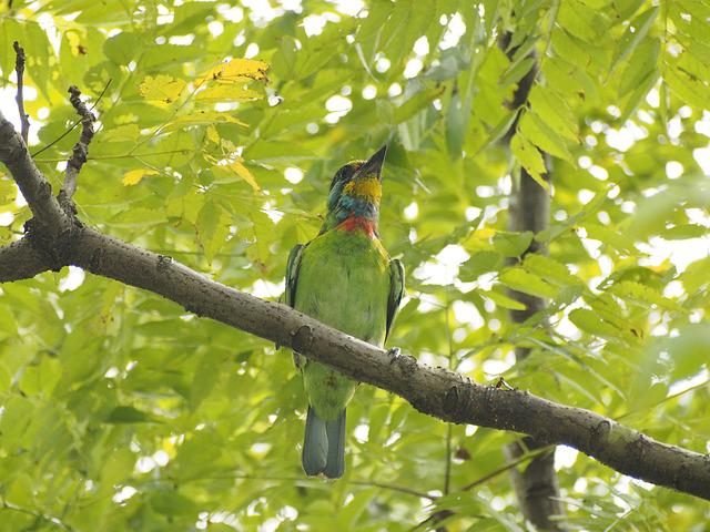 Colored Birds, Monk, Quasi Woodpecker, Alert