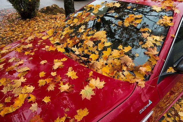 Auto, Alfa Romeo, Gulietta, Red, Maple, Autumn, Leaf