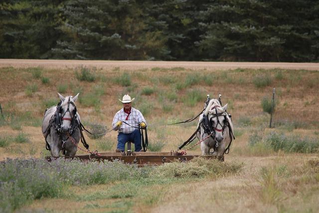 Horses, Hayfield, Rake, Summer, Alfalfa, Grass