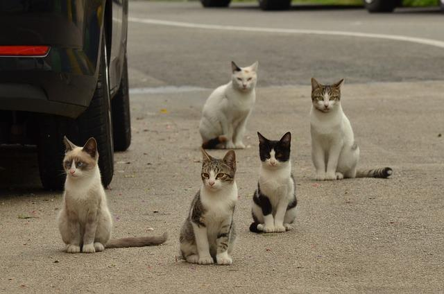 Cat, Kitten, Alley Cat, Pet, Street