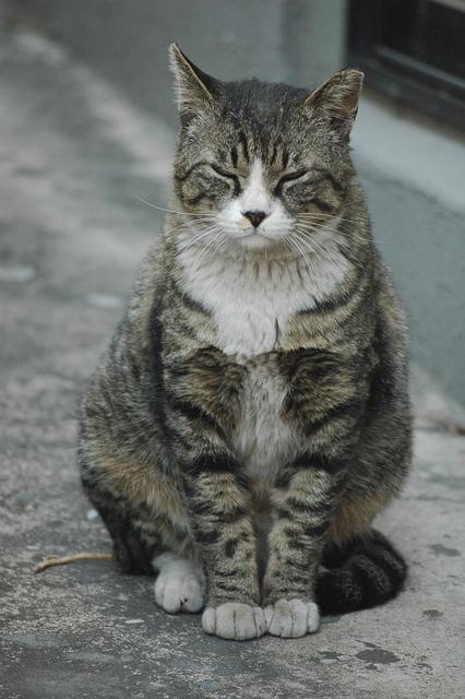 Cat, Alley, Street Cat