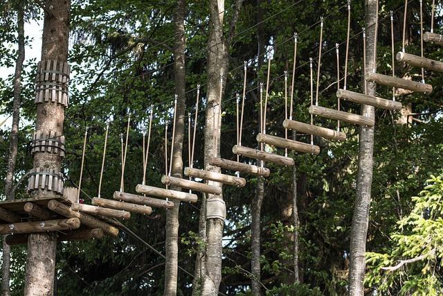 Forest, Allgäu, Climbing Garden, Alpine, Trees, Summer