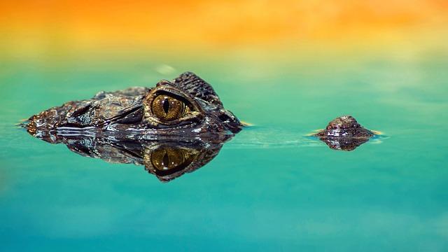 Crocodile, Zoo, Alligator, Animal, Reptile, Predator