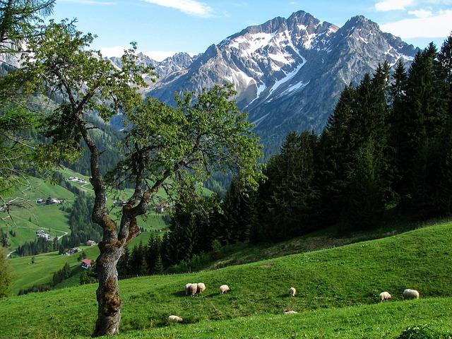 Alpine, Kleinwalsertal, Alm, High Mountains, Sheep