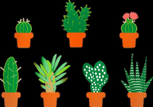 Cactus, Aloe Vera, Saguro, Aloe, Vera, Botany, Agave
