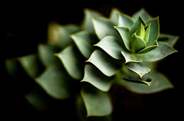 Aloe, Cactus, Plant, Flower