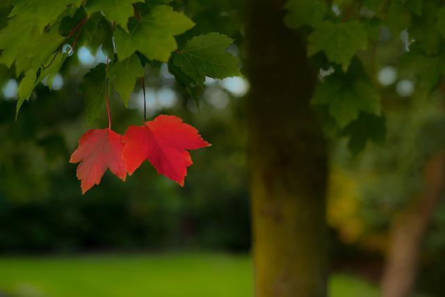 Lonely, Red, Leafs, Alone, Season, Autumn, Landscape
