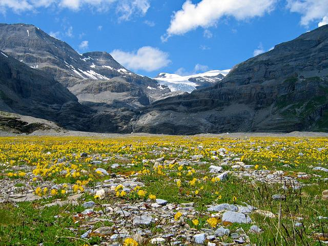 Mountain Flowers, Mountain, Alpine, Gemmi, Leukerbad