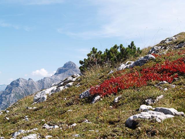 Alpine, Hawk, Mountain, Autumn, Landscape, Stubaital
