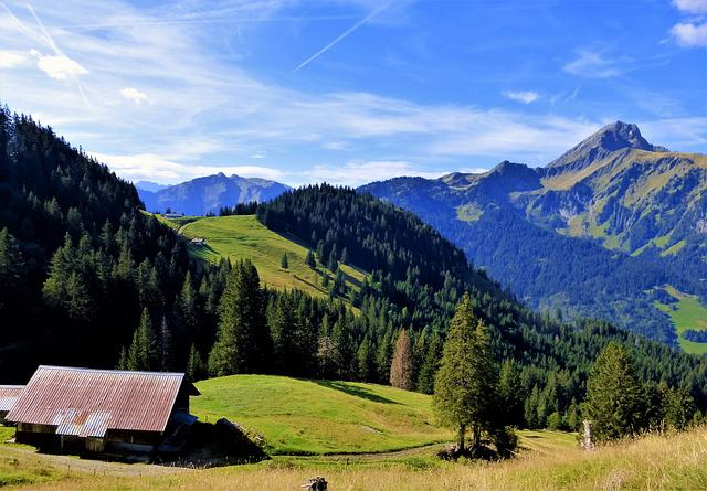 Nature, France, Alps, Haute Savoie, Mountain, Wood