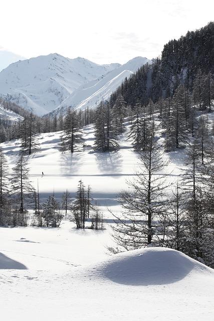 The Echalp, Nature, Alps, Queiras, Hiking, Trees