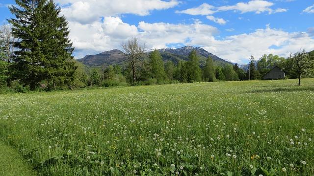 Grünau, Meadow, Alps, Sunshine, Landscape, Nature, Sky