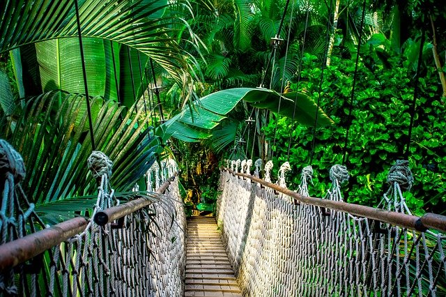 Suspension Bridge, Rainforest, Amazon