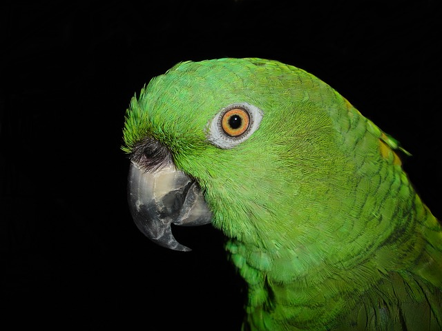 Yellow Neck Amazone, Parrot, Amazone, Bird, Green
