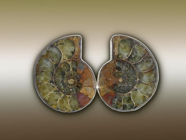 Ammonit, Ammonoidea, Extinct, Cephalopods, Were