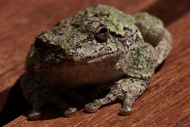Frog, Amphibian, Nature, Macro, Closeup, Toad, Outdoors