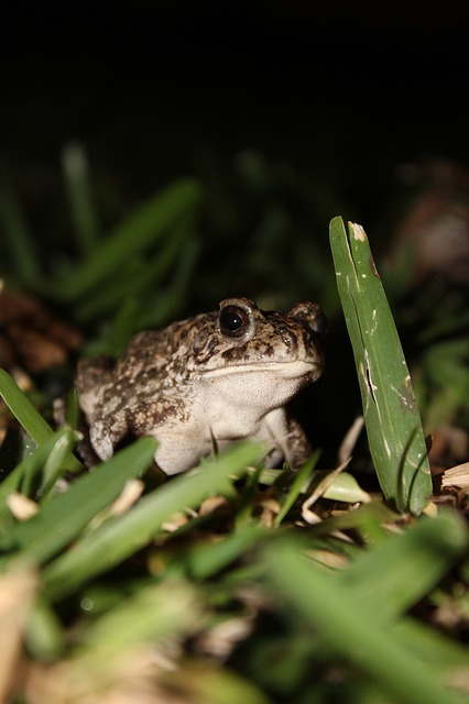 Toad, Anuran, Amphibians, Animal, Animal World