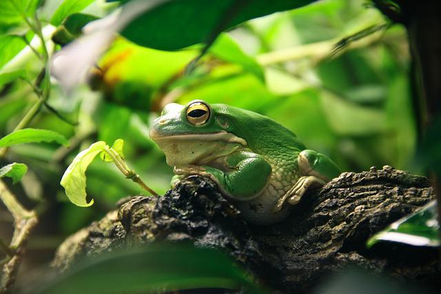 Frog, Terrarium, Amphibians