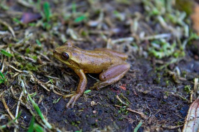 Frog, Amphibious, Animal, Croak