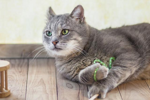 Cat, Curious, An, Animal, Pet, Feline