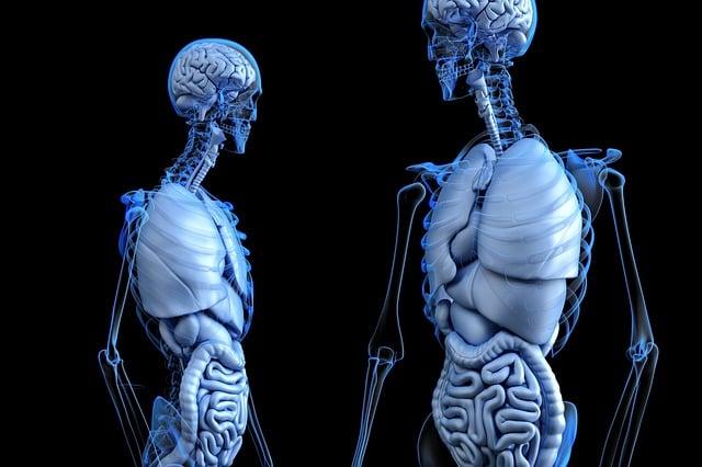 Anatomical, Anatomy, Body, Gut, Health, Human, Medical