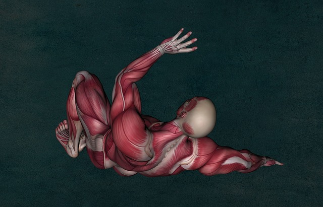 Anatomy, Muscle, Muscular System, Muscle Anatomy
