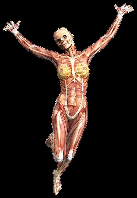 Anatomy, Female, Muscles, Skeleton, Tissue