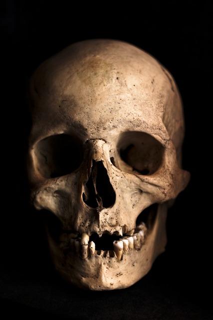 Skull, Human, Head, Skeleton, Bone, Horror, Anatomy