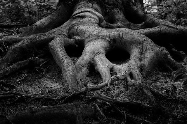 Tree, Root, Forrest, Forest, Ancient, Art