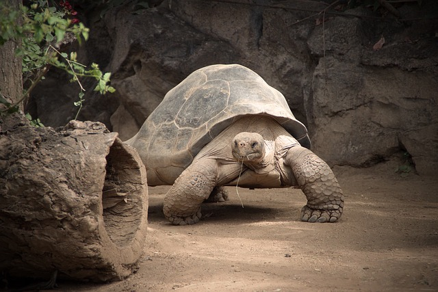 Free photo Animal A Nature Reptile Slowly Turtle - Max Pixel