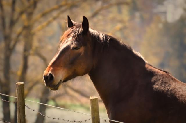 Horse, Animal, Animal Photography, Nature, Pasture