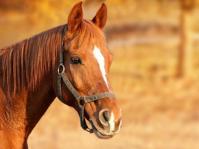 Horse, Brown, Animal Portrait, Horse Head, Animal