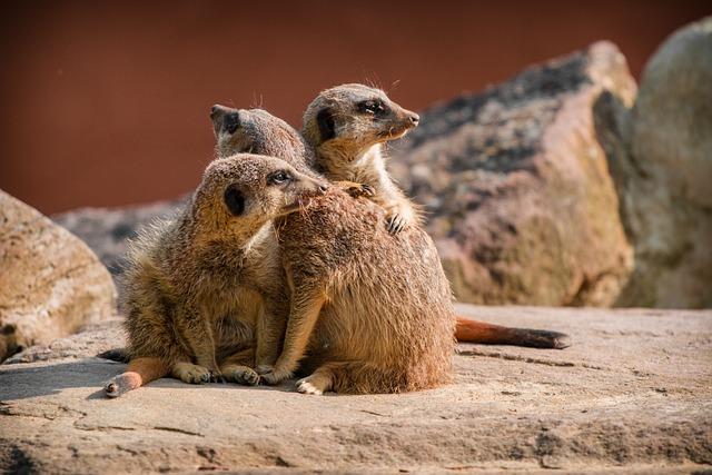 Nature, Animal World, Animal, Mammal, Wild