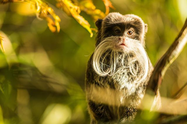 Animal, Monkey, Mammal, Zoo, Animal World, Primate