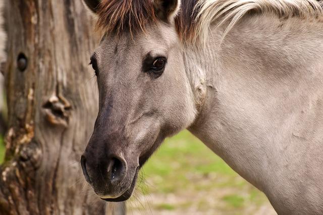 Tarpan, Horse, Animal, Nature, Mold, Animal World
