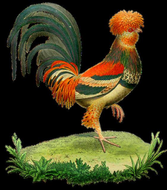 Vintage Rooster, Chicken, Animal, Vintage, Old, Antique