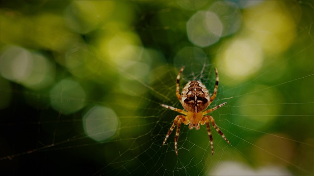 Araneus, Spider, Cobweb, Animal, Insect, Close Up