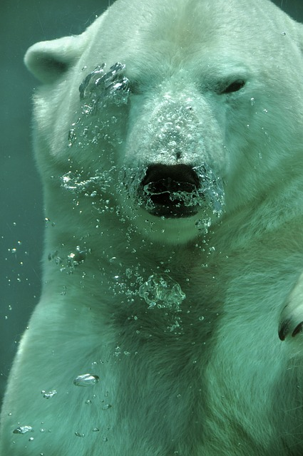 Polar Bear, Bear, Arctic, Animal, Mammal, Submerged
