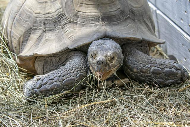 Poroszlo, Turtle, Animal, Tortoise, Reptiles, Armor
