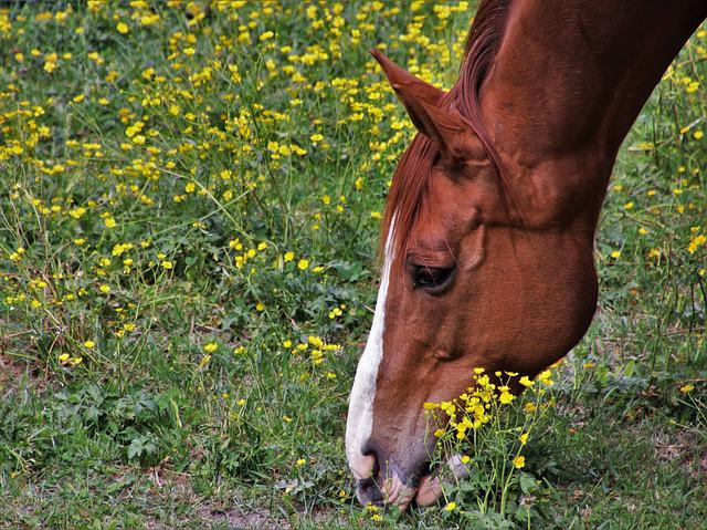 Horses, Based, The Horse, Horse Head, Animal, Bay