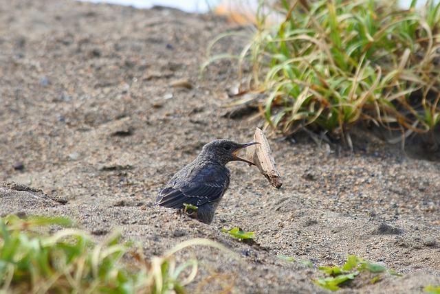 Animal, Beach, Little Bird, Method Bulbul, Young Bird