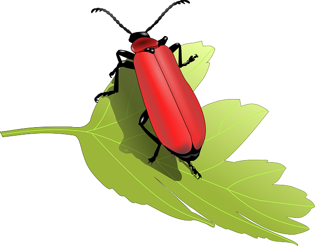 Beetle, Bug Insect, Leaf, Nature, Animal, Antennae, Red