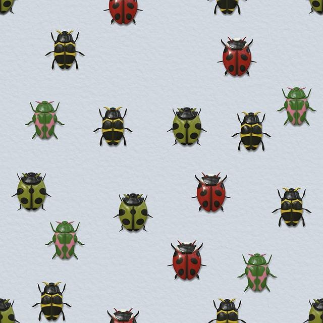 Beetle, Insect, Ladybug, Animal