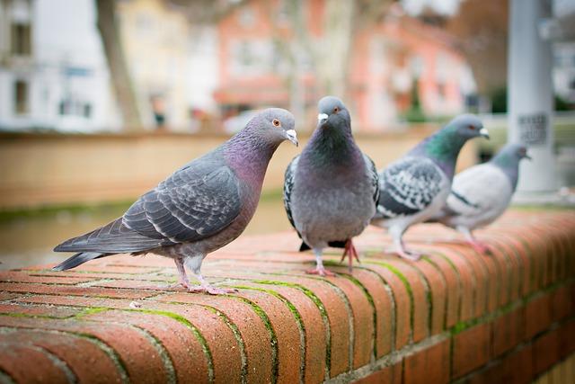 Bird, Nature, Dove, Spring, Animal, Animal World, Bill